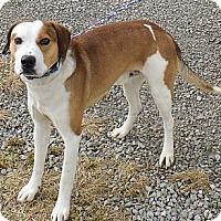 Adopt A Pet :: Ross - Washington Court House, OH