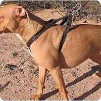 Adopt A Pet :: Wei Ling - Sierra Vista, AZ