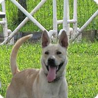 Adopt A Pet :: Wiggy (fostered in NC) - Cranston, RI