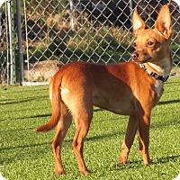 Adopt A Pet :: Simba - Meridian, ID