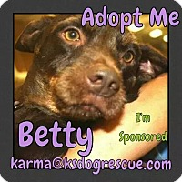 Adopt A Pet :: Betty - Cheney, KS
