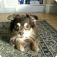 Adopt A Pet :: Roscoe - Chicago, IL