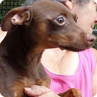 Adopt A Pet :: Chance - Crump, TN
