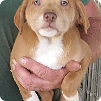 Adopt A Pet :: Daniel - Gainesville, FL