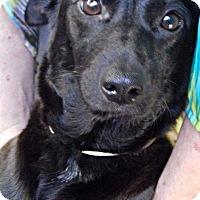 Adopt A Pet :: India - Orlando, FL