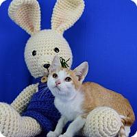Adopt A Pet :: Tanner - Carencro, LA