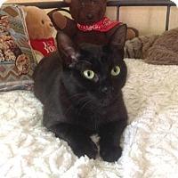 Adopt A Pet :: Black Beauty - Alameda, CA