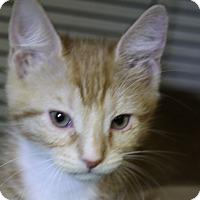Adopt A Pet :: Warbler - Sarasota, FL