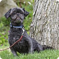 Adopt A Pet :: HASHTAG - Ile-Perrot, QC