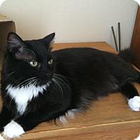 Adopt A Pet :: Boxer - Lincoln, CA