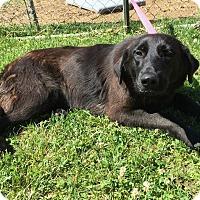 Adopt A Pet :: Selma - Sparta, NJ