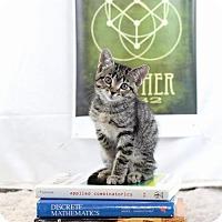 Adopt A Pet :: Emmy Noether - Glastonbury, CT