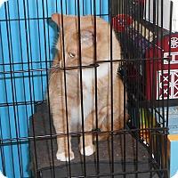 Adopt A Pet :: Milo - Rochester, MN