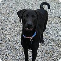 Adopt A Pet :: Aries - Elyria, OH