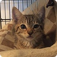 Adopt A Pet :: Rio - Los Angeles, CA