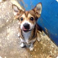 Adopt A Pet :: Billy Boy - Pompton lakes, NJ