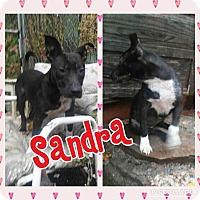 Adopt A Pet :: Sandra - Cranston, RI