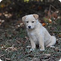 Adopt A Pet :: keeper - Groton, MA