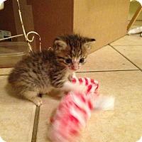 Adopt A Pet :: Maggie - ROSENBERG, TX
