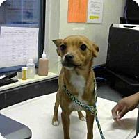 Adopt A Pet :: *LANIA - Sacramento, CA