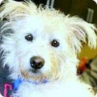 Adopt A Pet :: PEARL(WHAT A STORY-PLS READ! - Wakefield, RI