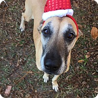 Adopt A Pet :: MISTY - Wilmington, NC