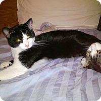 Adopt A Pet :: Hamilton - Middletown, OH