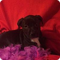 Adopt A Pet :: Dana - Foristell, MO