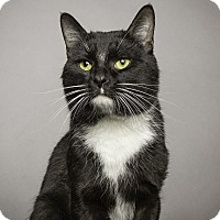 Adopt A Pet :: Dennis - Gadsden, AL