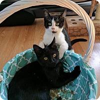 Adopt A Pet :: Colson - Concord, NC