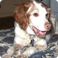 Adopt A Pet :: OH/Skipper - Erie, PA