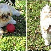 Adopt A Pet :: Lucie-VA - Suffolk, VA