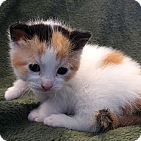 Adopt A Pet :: Penny - Florence, KY