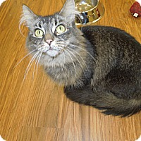Adopt A Pet :: Precious - Medina, OH