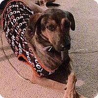 Adopt A Pet :: Moco - La Crosse, WI