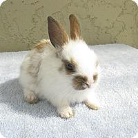 Adopt A Pet :: Stache - Bonita, CA