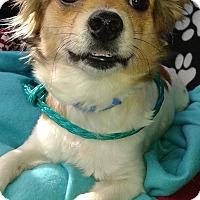 Adopt A Pet :: TJ - Las Vegas, NV
