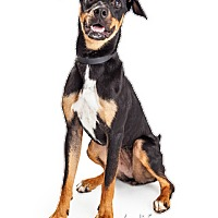 Adopt A Pet :: Lucille - Tempe, AZ