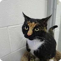 Adopt A Pet :: Mia - Springfield, VA