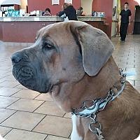Adopt A Pet :: KARMA - Oswego, IL