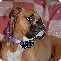 Adopt A Pet :: Coco - Woodinville, WA