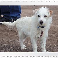 Adopt A Pet :: MURPHY - Medford, WI