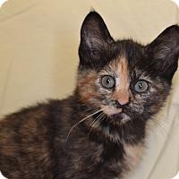 Adopt A Pet :: Ginger - Larned, KS