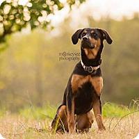 Adopt A Pet :: Vail - Clayton, NC