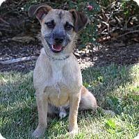 Adopt A Pet :: Miles - Monrovia, CA