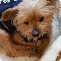 Adopt A Pet :: Barkley (AB) - Tampa, FL