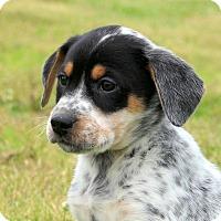 Adopt A Pet :: Benson - Glastonbury, CT