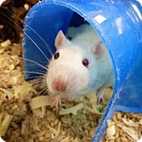 Adopt A Pet :: MARS - Fort Wayne, IN