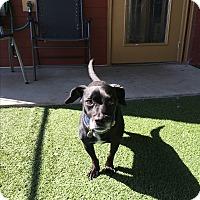 Adopt A Pet :: Oberyn - Nashville, TN