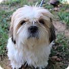 Adopt A Pet :: Evanna B ~A Gem